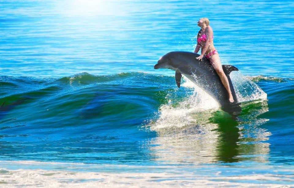 soñar nadar con delfines