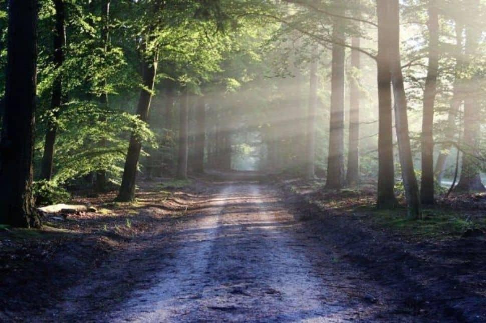 Otras connotaciones relativas a soñar con árboles