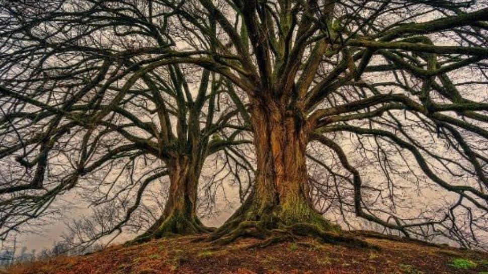 Soñar con árboles altos