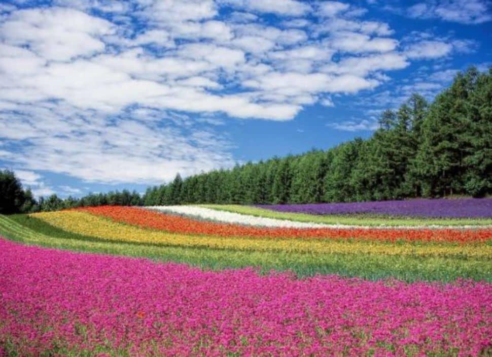 Soñar con un campo de flores