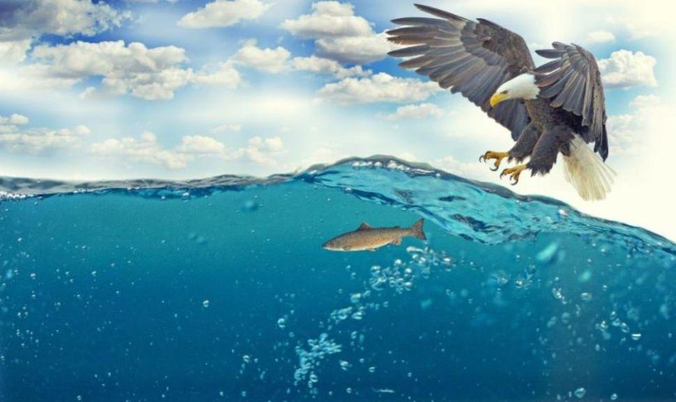 Soñar con águila cazando