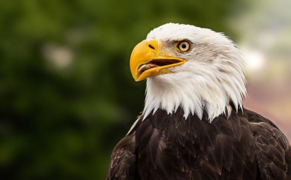 significado de soñar con un águila