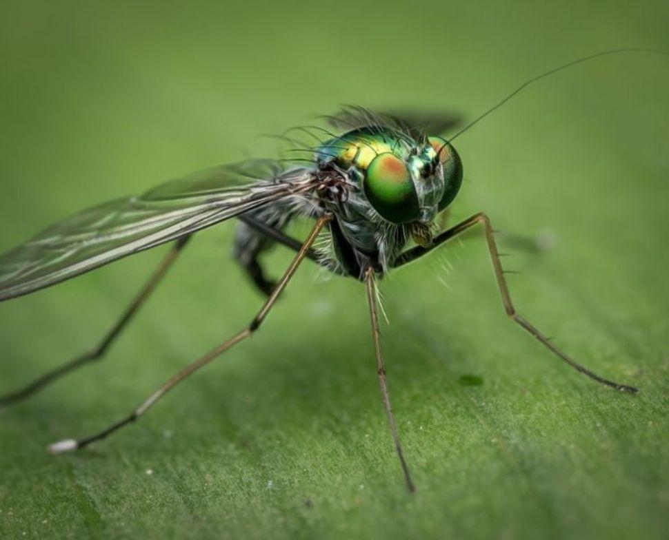 Soñar con moscas pequeñas