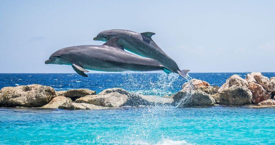 Soñar con delfines en la orilla del mar