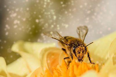 soñar que te pican abejas