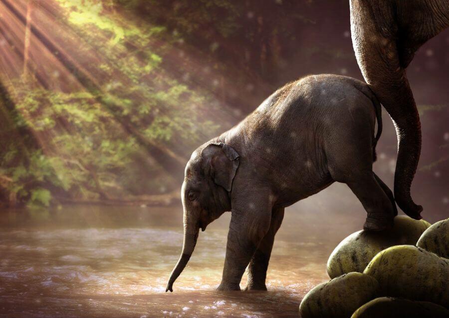 Soñar con cría de elefante