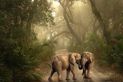 soñar con elefantes bebés