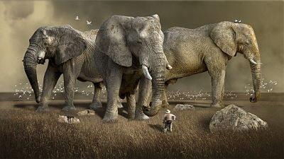 soñar con elefantes grandes