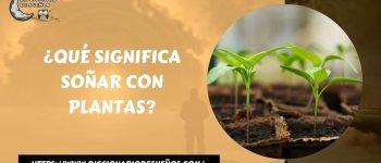 Soñar con Plantas - ¡Un Sueño Muy Vivo!