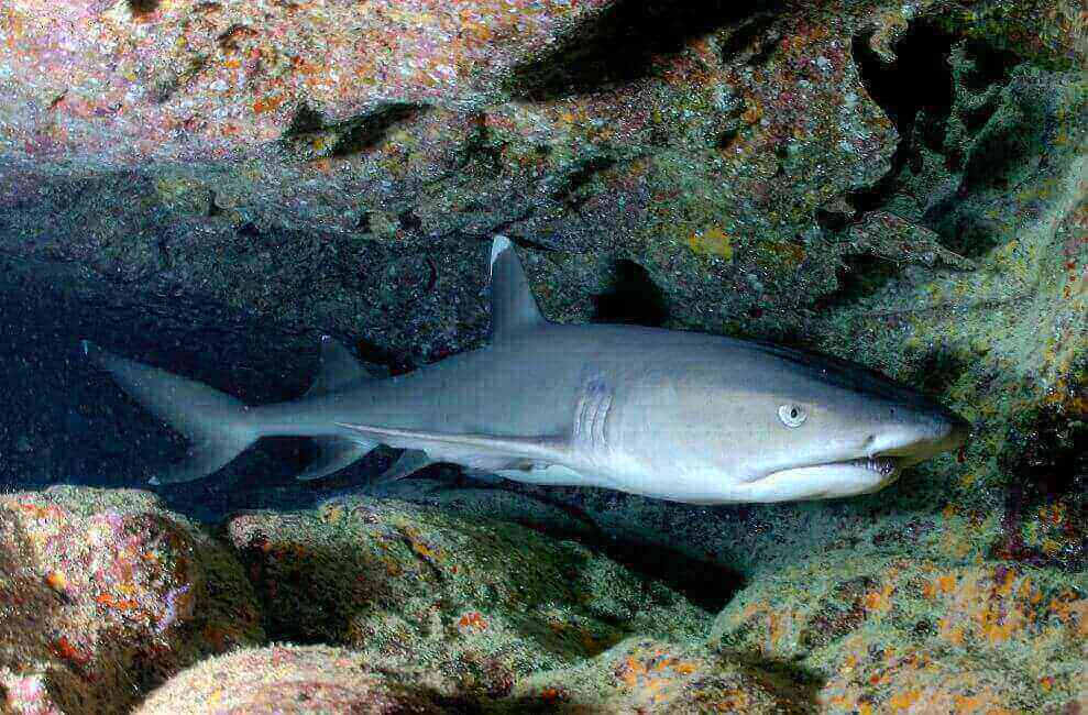 Soñar con tiburones blancos