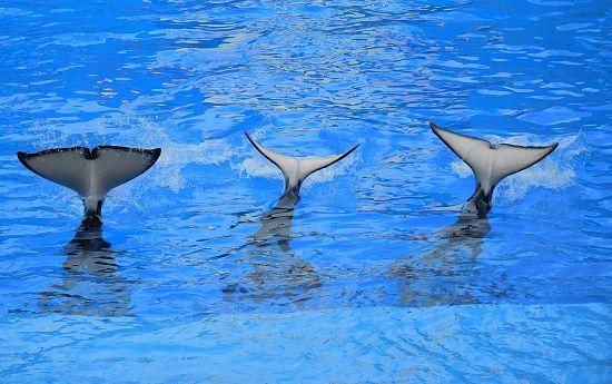 Soñar con aleta de ballena