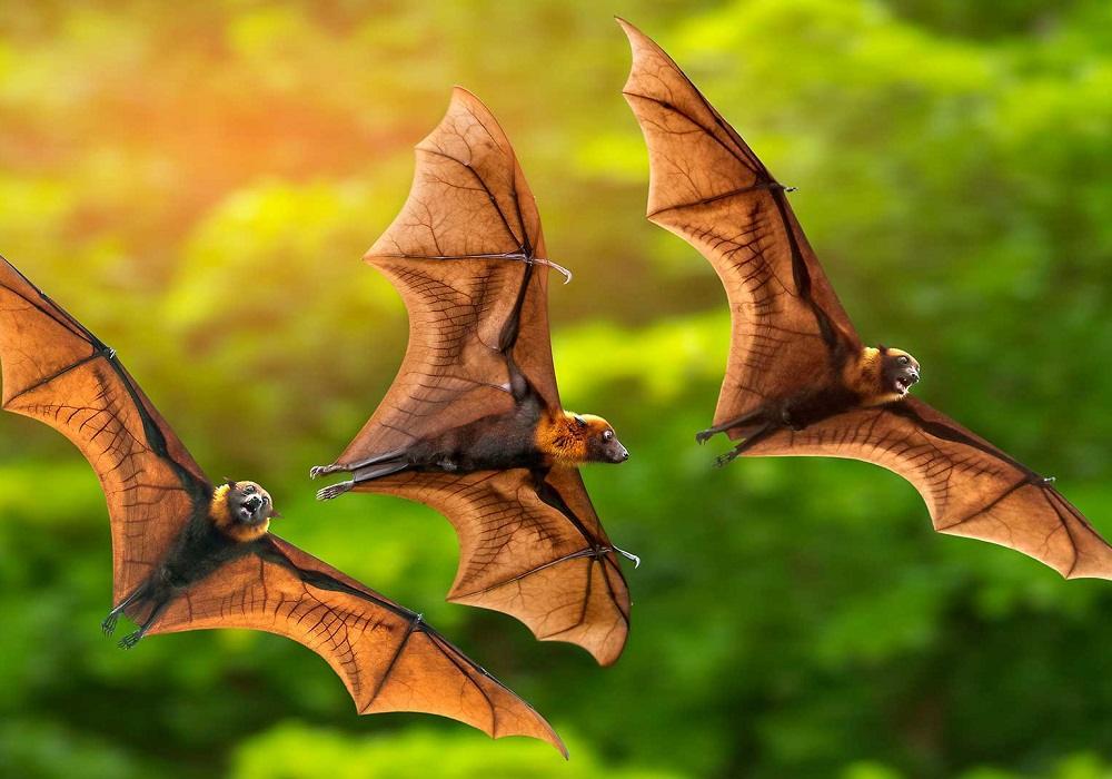 Soñar con murciélagos que atacan